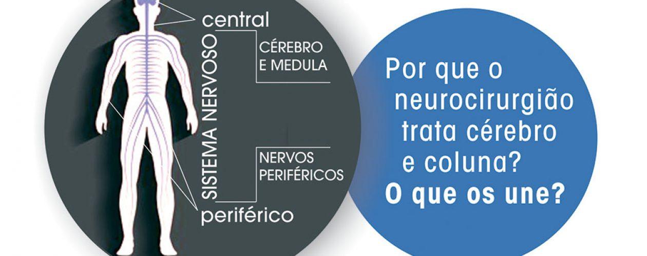 Compreenda a ligação entre inervação e coluna e como o cérebro faz isto tudo funcionar